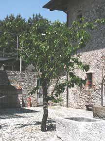 Friuli: Morâr, c'era una volta il gelso nelle fotografie di Quaiattini